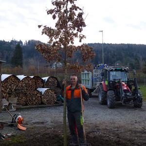 Einsetzen eines neuen Baumes