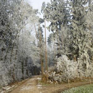 Pflege des Waldes